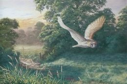 barn-owl-flying