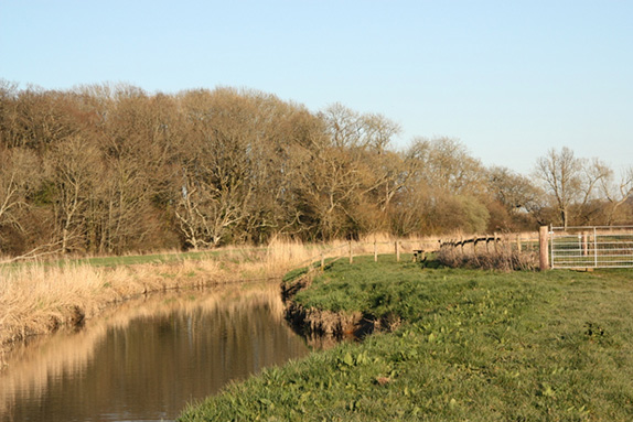 The Wineham and  Twineham area is an irreplaceable habitat for many endangered and declining species of birds.
