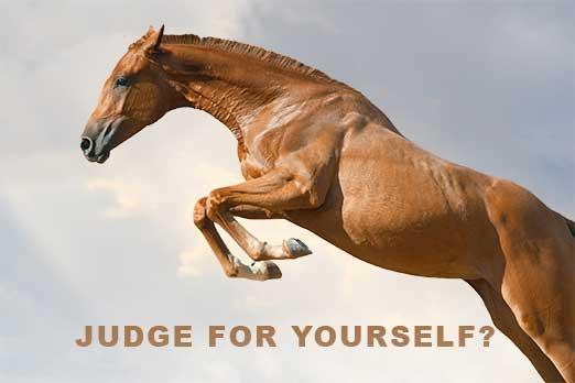 horse-banner-poll
