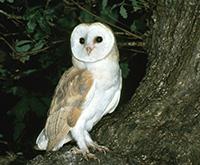 owl-msp200