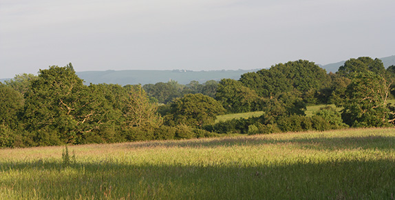 Looking South from Mayfields proposed site towards Devil's Dyke National Trust viewpoint.